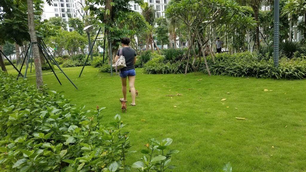 Cư dân giẫm lên cỏ và cho chó đi vệ sinh